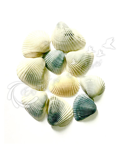 CONCHAS DO MAR NATURAIS MOD 04